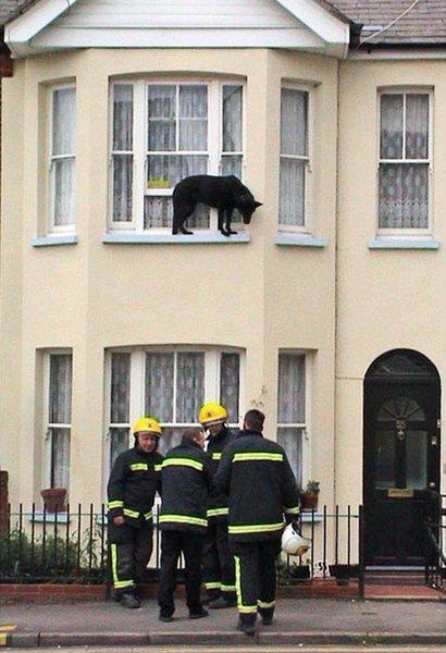 Собака по кличке Дэйзи на окне дома в Челмсфорде, Эссекс. Ее спасли пожарные. (REX FEATURES)